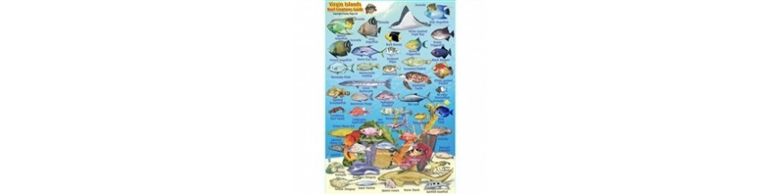 Fish ID Cards & Maps