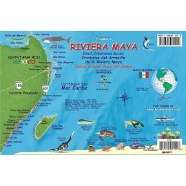 "Riviera Maya Reef Creatures 6""x9"" LAMINATED"
