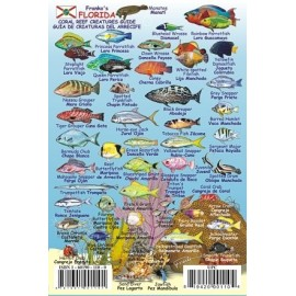 "Mini Florida Reef Creatures 4""x6"" Fish ID LAMINATED"